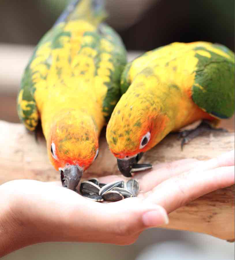 parrot is eating foods on people hand.