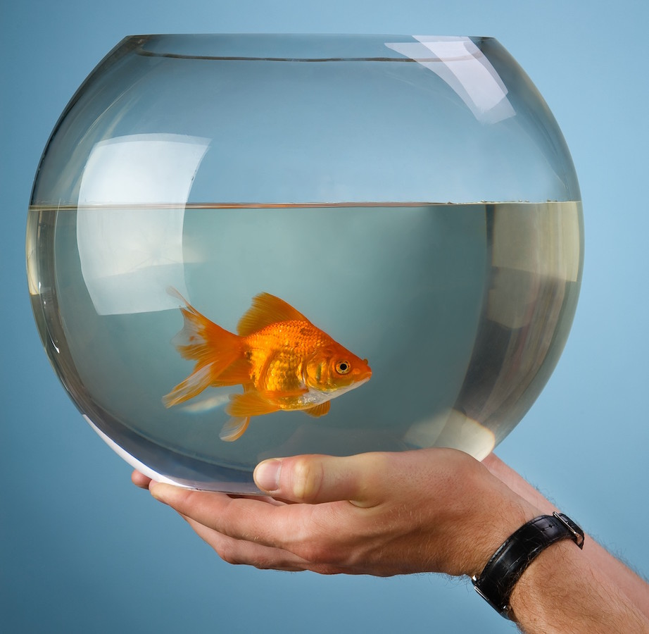 Man's hands hold a round aquarium in which the gold small fish floats