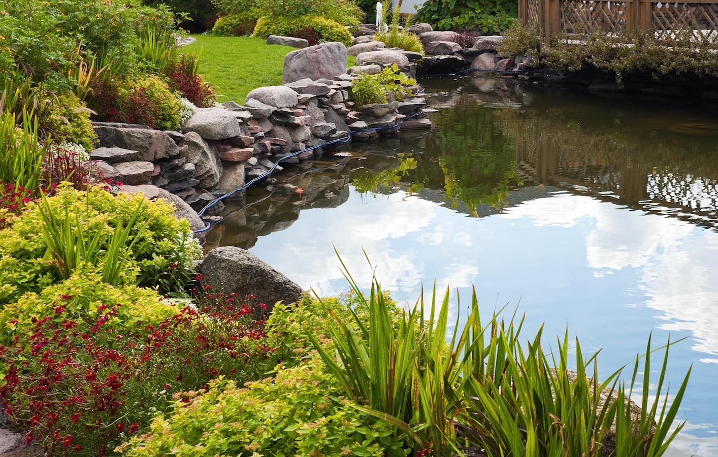 Beautiful pond with exotic fish