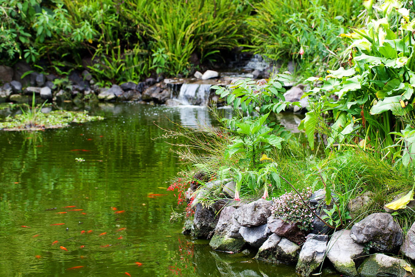 fish pond and green trees around
