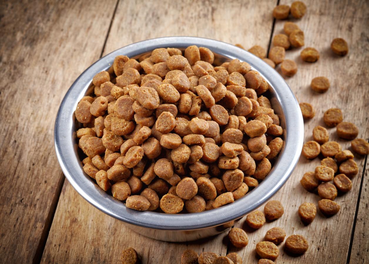 Bowl of pets food on wooden floor