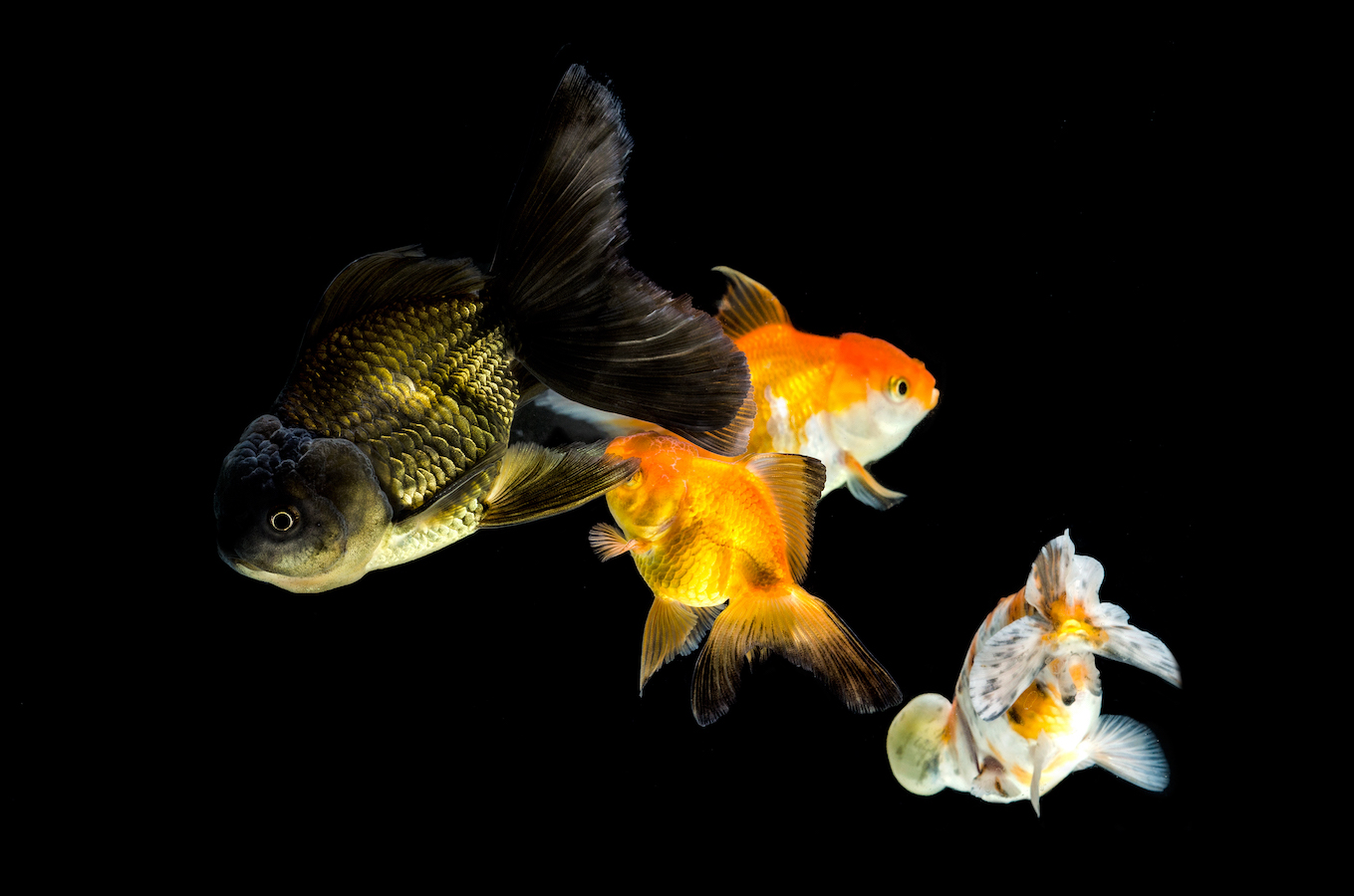 Group of pets standing against black background