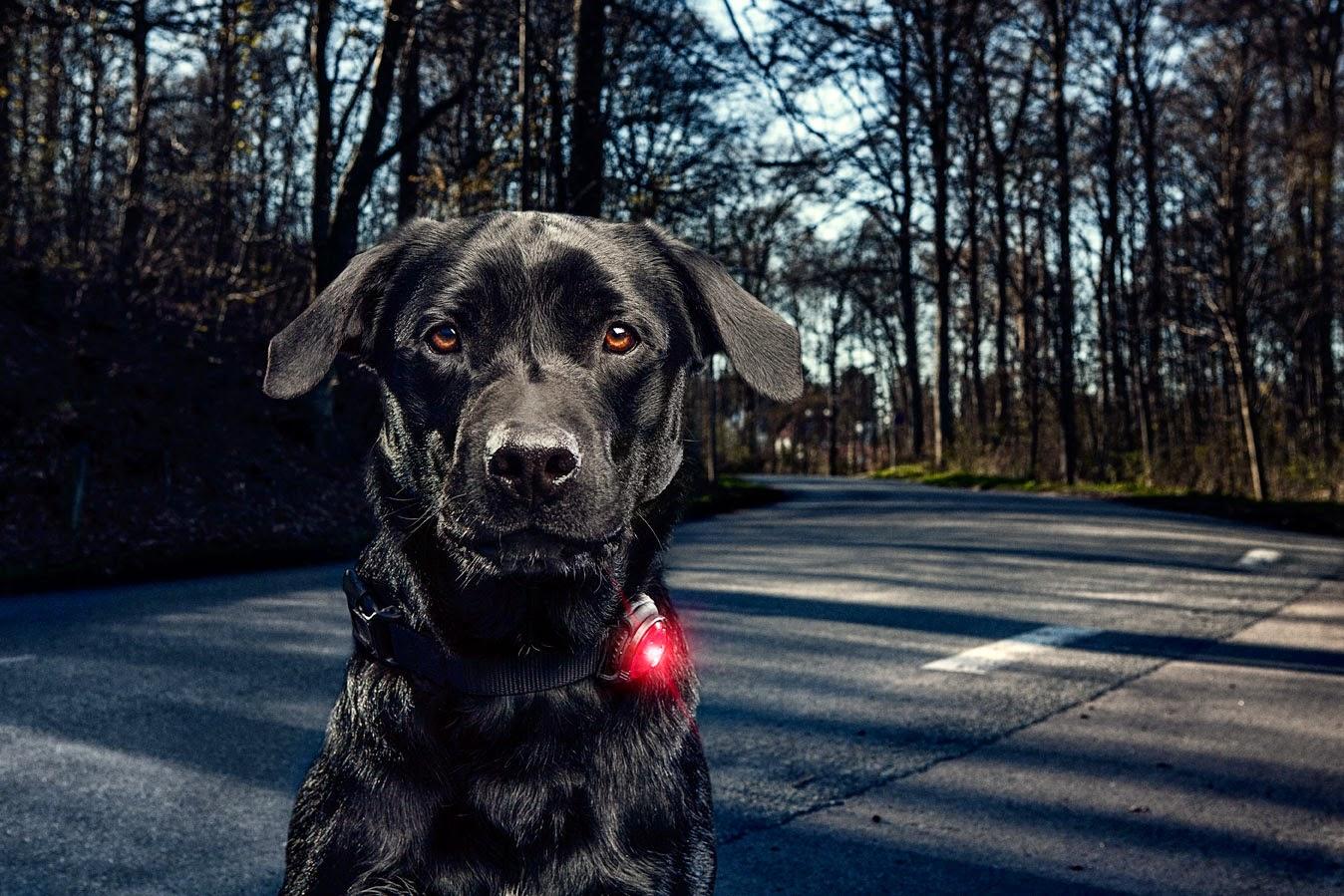 orbiloc_dog_dual_action1