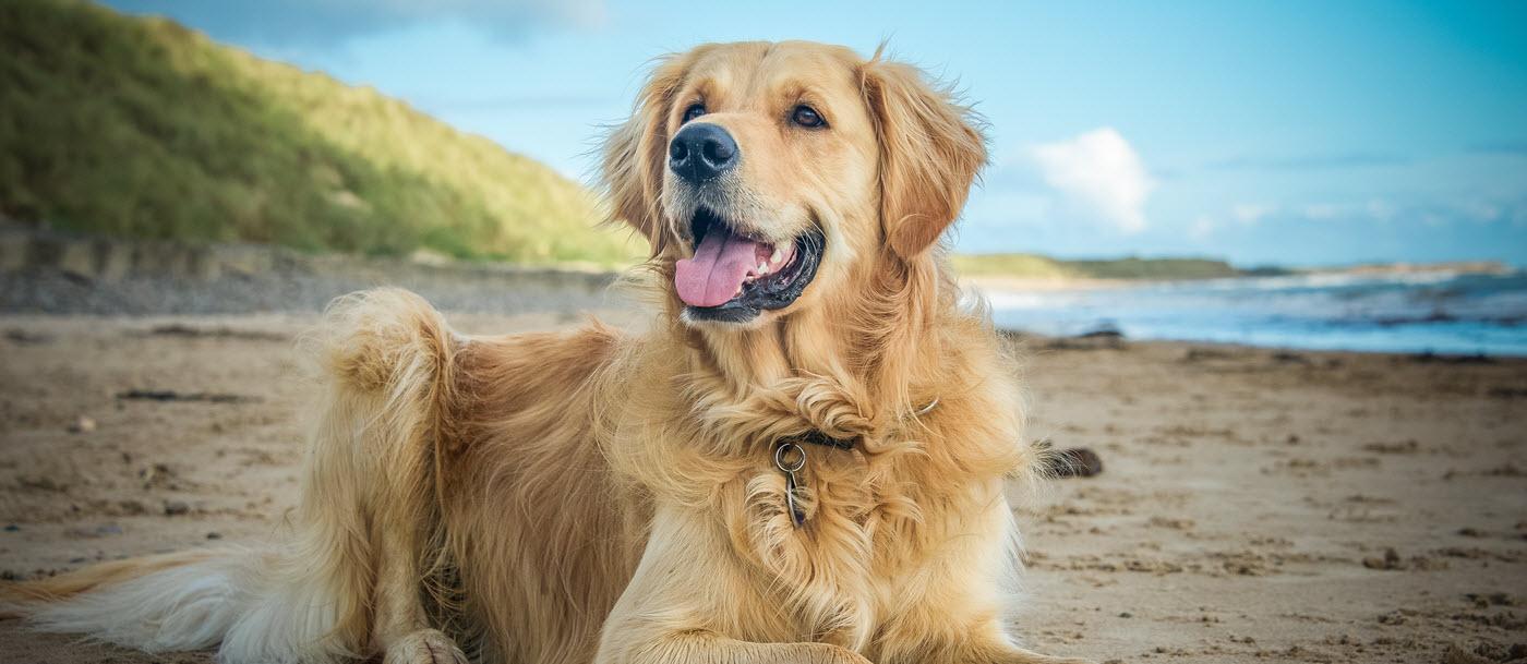 plaqueoff-animal-dog