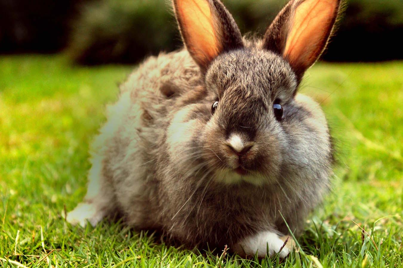 stockvault-a-curious-baby-rabbit-in-a-garden150816