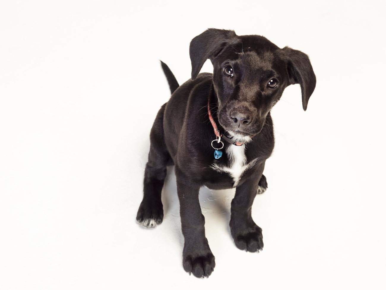 stockvault-black-puppy167567