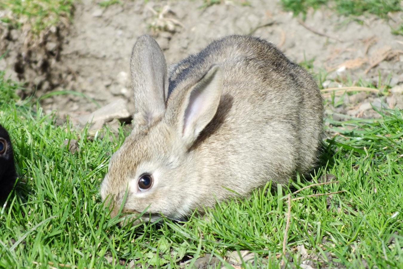 stockvault-rabbit138754