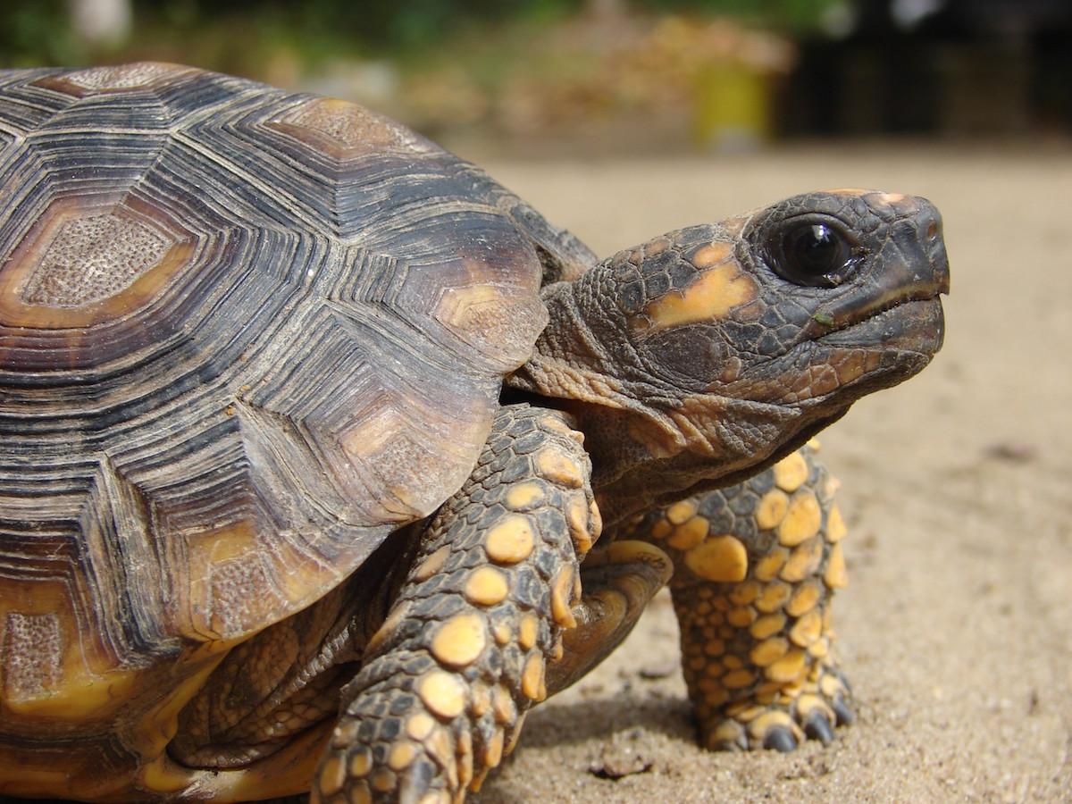 stockvault-turtle114902